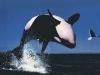 orca_0